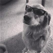 The Coolest Dog Ever.