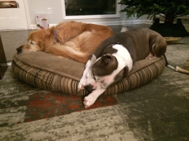 Allows Lola to share her bed.