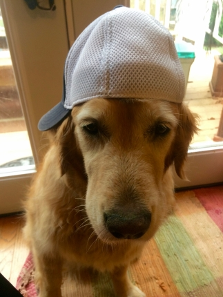 Yo, yo. I'm a hat dog.