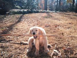 puppy-emmy-with-stick